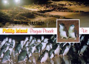 phillip-island-pinv
